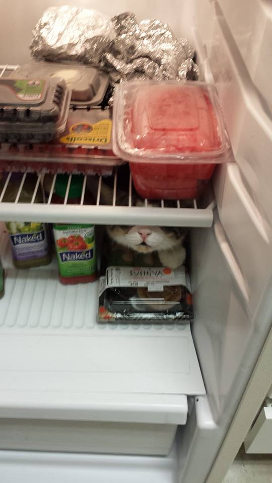 Felix-wont-stop-jumping-in-the-fridge
