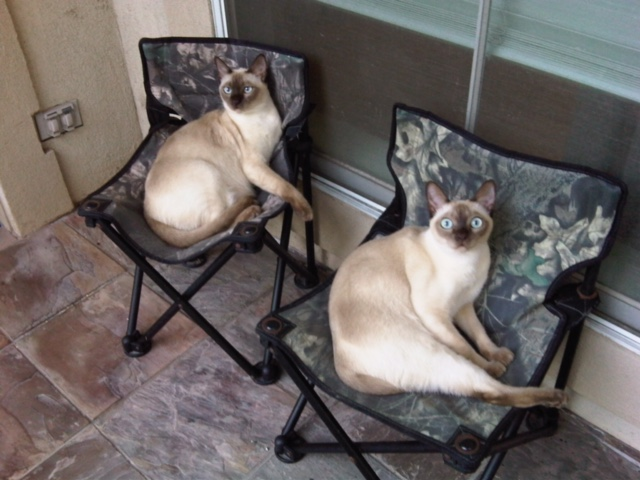 Twin chairs