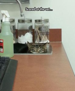 Does your cat need his annual vaccines?