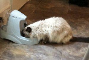 cat hydration