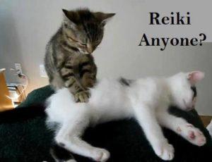 reikicats