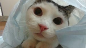 Urinary blockage in cats cat be deadly.
