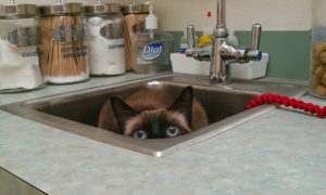Cat health is best monitored with annual wellness exams.