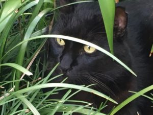 Pancreatitis in cats can be managed holistically