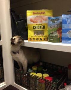 Cats can't resist Grandma Lucy's cat treats