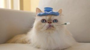 Upper respiratory disease in cats