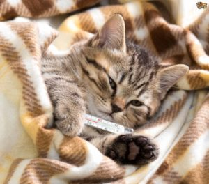 Natural remedies can treat upper respiratory disease in cats