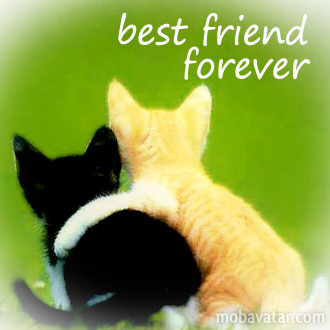 Image result for bff kittens
