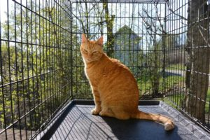 The great outdoors for indoor cats