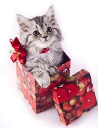 holiday shopping for cat lovers