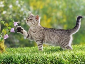 Natural remedies for cats with seasonal allergies