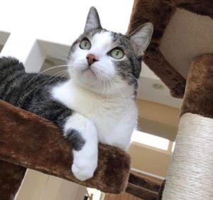Cat health and CBD