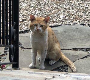 Feral cat health