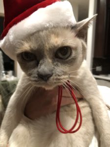 Gift ideas for cats