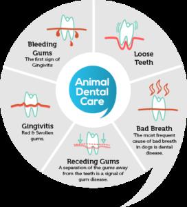 gum disease in pets