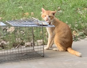 Holistic approach to TNR for feral cats