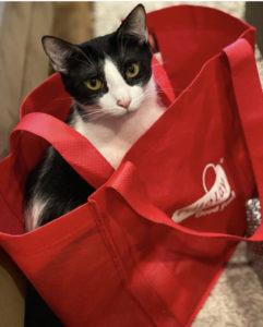 detox vaccines in cats