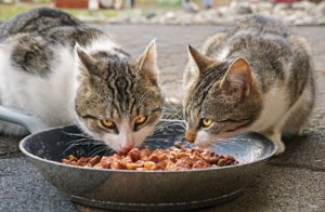 Glyphosate exposure in pet food