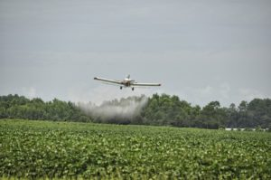 glyphosate herbicide is sprayed on crops